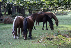 New forest self catering breaks
