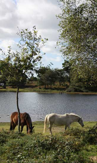 New Forest cottages and lodges for holidays