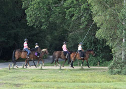 pony trekking in the New Forest