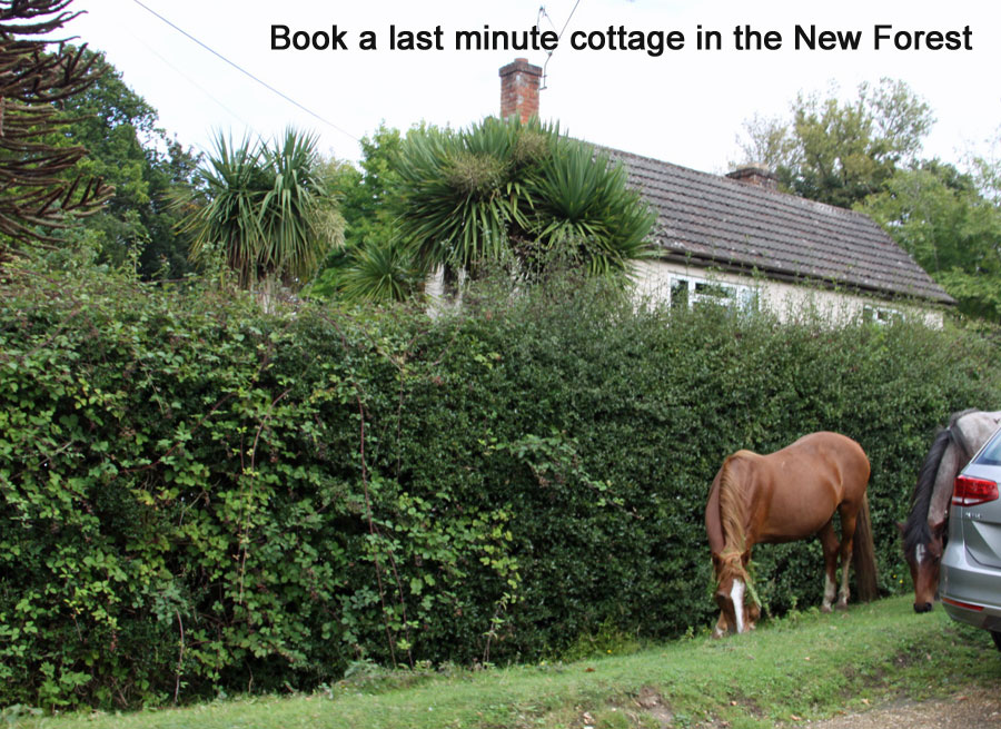 last minute new forest cottages