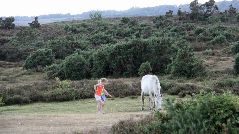 magical new forest encounters